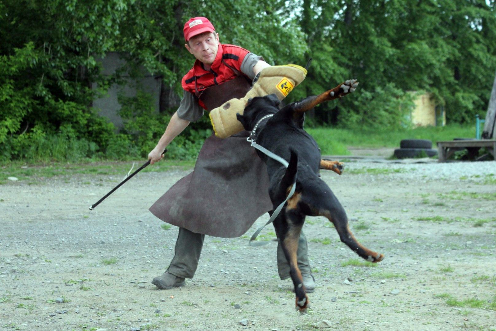 защитная_работа_с_собакой