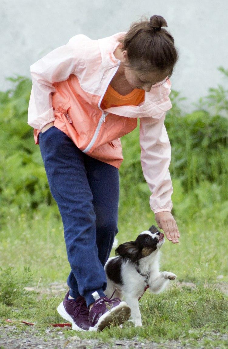 послушание_маленьких_собак